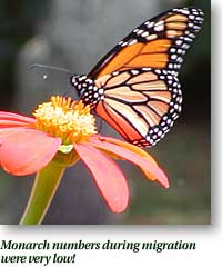Monarch numbers during migration were very low