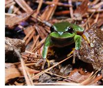 Frog Slog