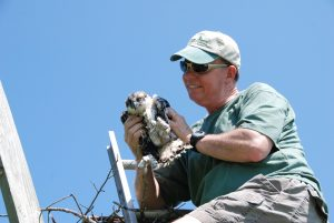 Peter Galetto Banding an Osprey