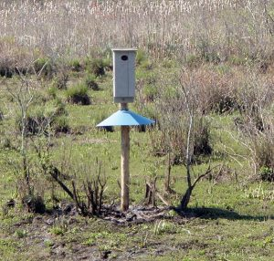 CU Maurice River wood duck nesting box