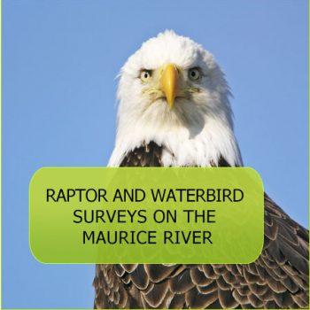 avian-raptors