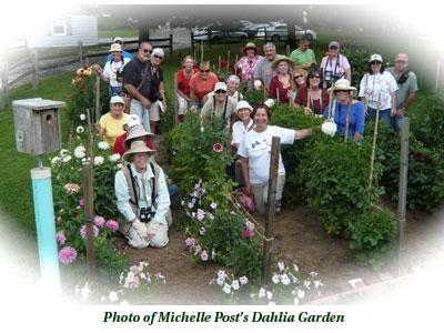Michelle Post's Dahlia Garden