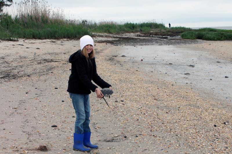 Helping horseshoe crabs