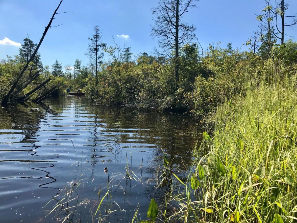 Muskee River Pinelands Stream Creek
